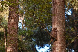 owl-yellow-eyes-perched-woods-whidbey