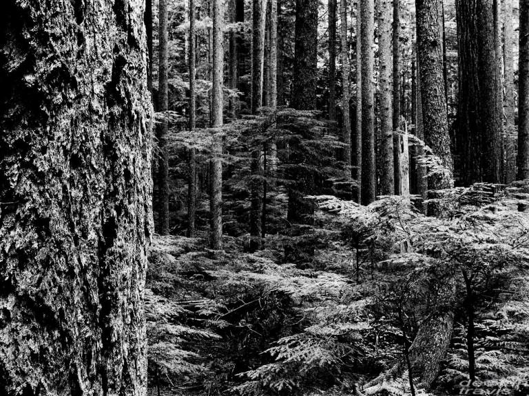 cedar-skinz-barred-life-x21