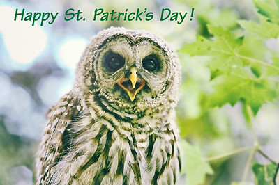happy-st-patricks-day-owl-barred-life