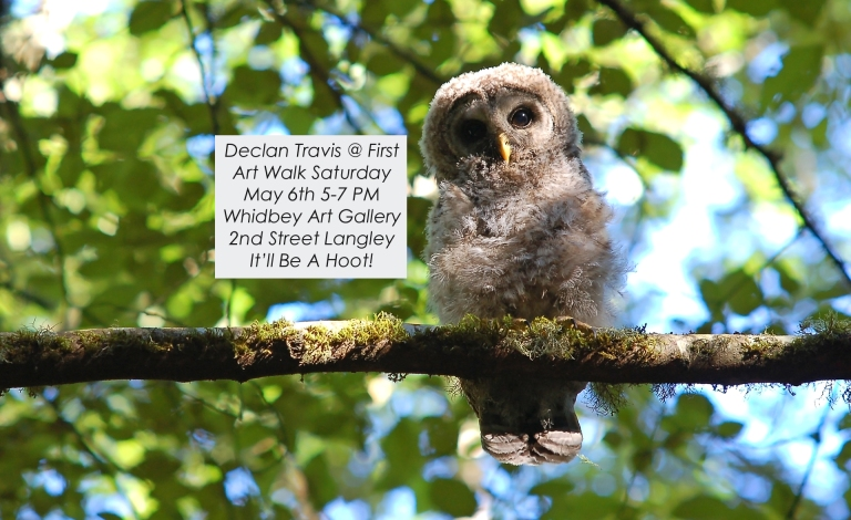 owl-fledgling-mossy-branch-looking-camera-gallery-promo.jpg